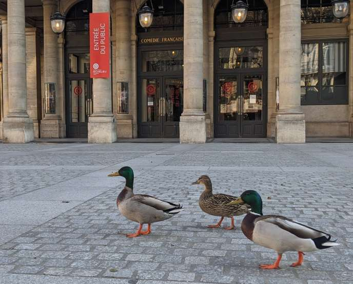 Ducks in front of the Comédie Française in Paris, April 2, 2020.