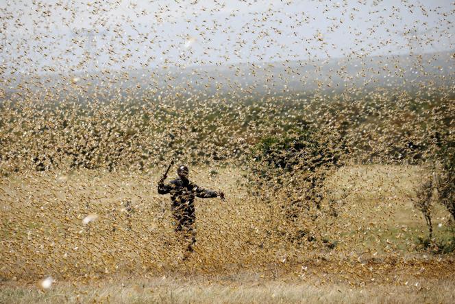 Une nuée de criquets pèlerins près de Nanyuki, au Kenya, le 21février 2020.