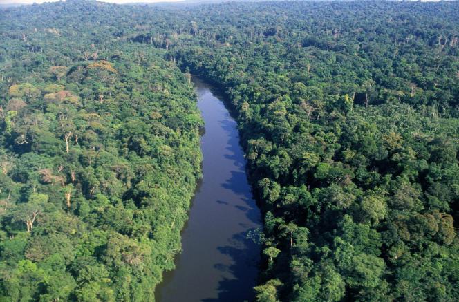 La forêt amazonienne, qui abrite quelques-un des peuples« non contactés».