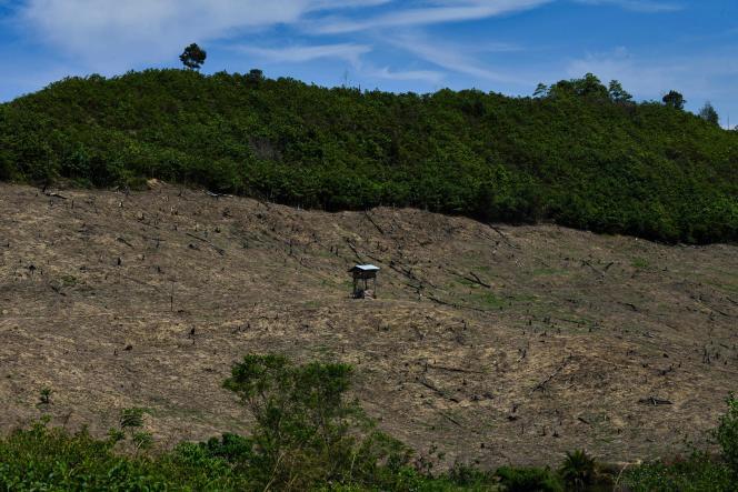 Des terres agricoles gagnées sur la forêt à Calang, dans la province d'Aceh en Indonésie, le 3 avril.