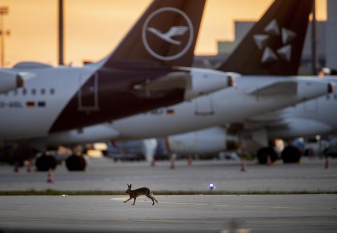 Un lièvre court le long des avions immobilisés sur la piste de l'aéroport de Francfort, le11 avril.