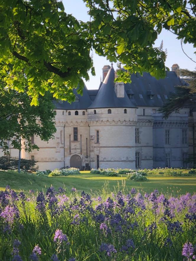 Les floraisons printanières, à l'entrée du château de Chaumont-sur-Loire (15 avril 2020).
