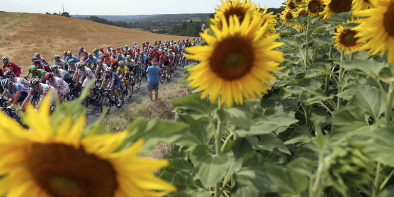 FILE - In this Wednesday, July 17, 2019 file photo the pack rides past a sunflowers fields during the eleventh stage of the Tour de France cycling race over 167 kilometers (103,77 miles) with start in Albi and finish in Toulouse, France. This year's Tour de France will now start on Aug. 29 in Nice and finish on Sept. 20 in Paris and will be followed by cycling's other two major races. The Tour could not start as scheduled on June 27 because of restrictions related to the coronavirus pandemic. (AP Photo/Thibault Camus, File)