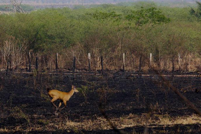Une zone brûlée de la forêt amazonienne, dans l'écorégion de Pantanal, au Brésil, en octobre 2019.