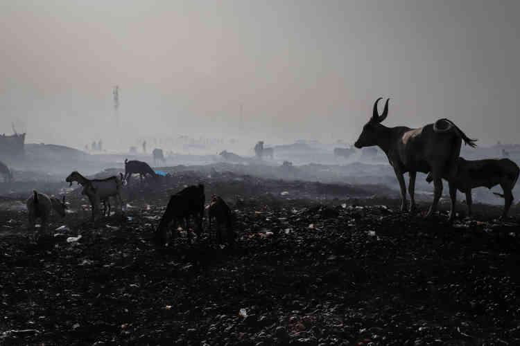 Mardi 28 avril, un incendie a ravagé le site de déplacés de Faladié, à Bamako, laissant le bétail des habitants en liberté autour du lieu de l'accident.