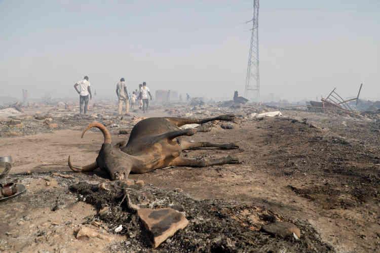 Une carcasse de boeuf carbonisé gît au milieu du camp ravagé. Un drame pour les habitants, dont la seule ressource économique est le bétail, notamment en période de ramadan.