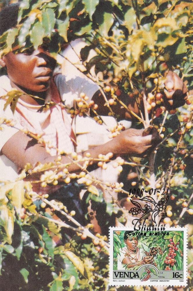 Carte-maximum avec timbre sur la récolte du café arabica, Venda, 1988.