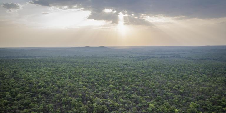 La réserve naturelle de Chinko, dans l'est de la République centrafricaine, est un éco-système unique composé de savane boisée parsemée d'îlots de forêt tropicale. L'ONG African Parks, qui gère cette aire protégée depuis 2014, espère mettre fin au braconnage et aux incursions de groupes armés, afin de donner une seconde vie à ce sanctuaire de vie sauvage.