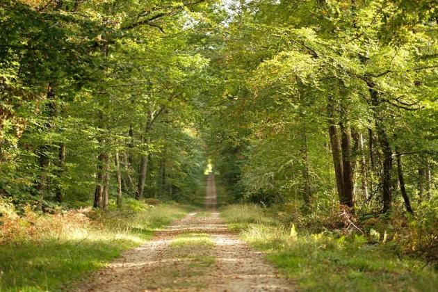 La forêt de Loches, en Indre-et-Loire.