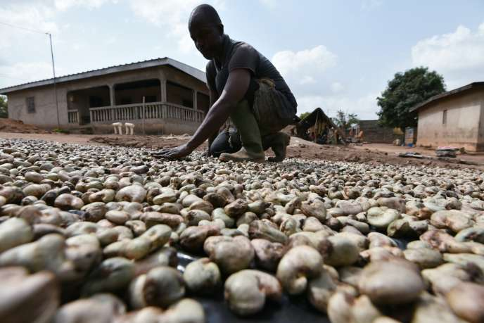 Un producteur ne noix de cajou, à Bouaké, en Côte d'Ivoire, en 2016.