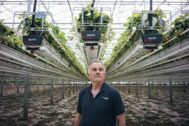 Patrick Jouy, producteur de fraises, à Sainte-Livrade-sur-Lot (Lot-et-Garonne), le 14 mai.