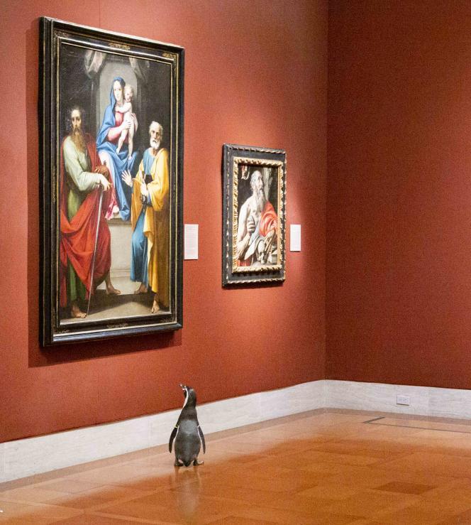 Des manchots du zoo de Kansas City explorent le Musée d'art Nelson-Atkins pendant le confinement dû à l'épidémie de Covid-19, le 6 mai.