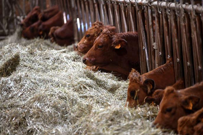 Un élevage de vaches laitières, à La Motte-en-Bauges (Savoie), le 4 décembre 2019.