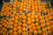 Des oranges au marché international de Rungis, en banlieue parisienne, en 2014.