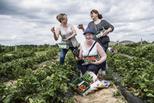 Cueillette de fraises pour trois copines, Sylvie, Martine et Sophie, àla ferme de Viltain, à Jouy-en Josas (Yvelines), le 22 mai.