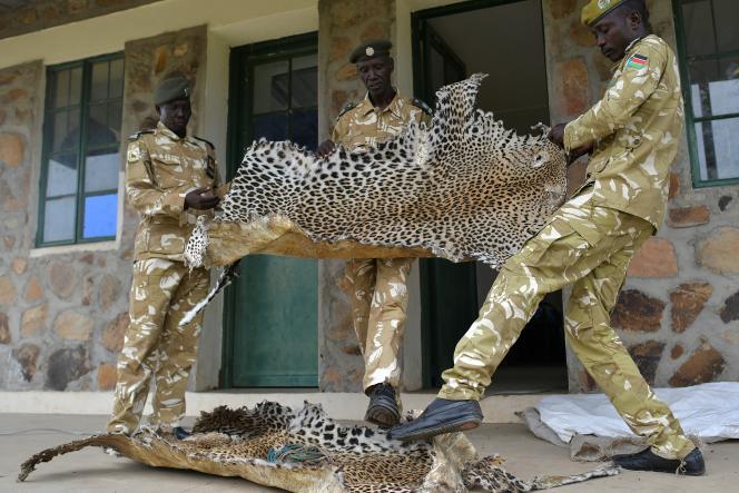 Peaux de léopard saisies par des gardes du parc national de Boma, au Soudan du Sud, le 4 février 2020.