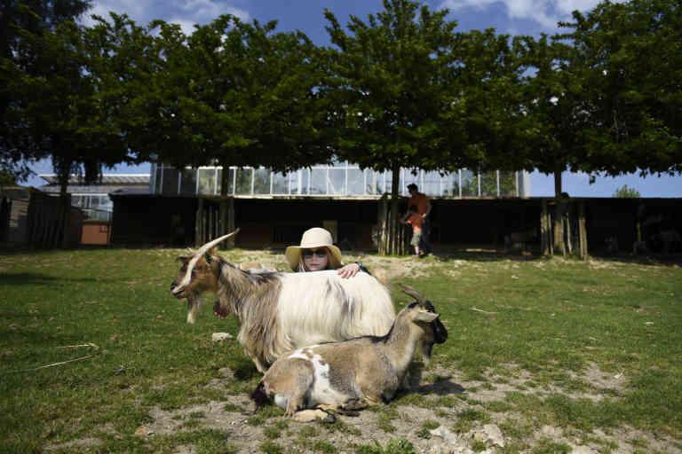 Mackenzie, 7 ans, et sa mère Valérie sont deux grandes fans du parc. Elles y viennet très souvent. Dès qu'elles ont vu sur la page facebook du parc qu'il était réouvert, elles sont venues tout de suite. Elles connaissent les animaux, suivent les naissances, voient les changements. Espace des chèvres que les visiteurs peuvent approcher et toucher. Premier jour d'ouverture du parc depuis le début du confinement instauré pour faire face au coronavirus le 17 mars 2020. Parc zoologique de Cerza, Hermival-les-Vaux, Normandie, France, 21 mai 2020.