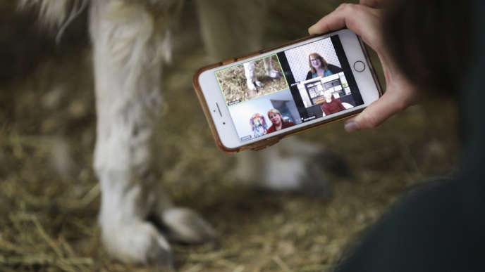 Kahle Boutte, propriétaire de Prairie Patch Farm, filme, en direct d'une ferme, à Shueyville (Iowa), le lama, Earl, pour une visioconférence, jeudi 28 mai.