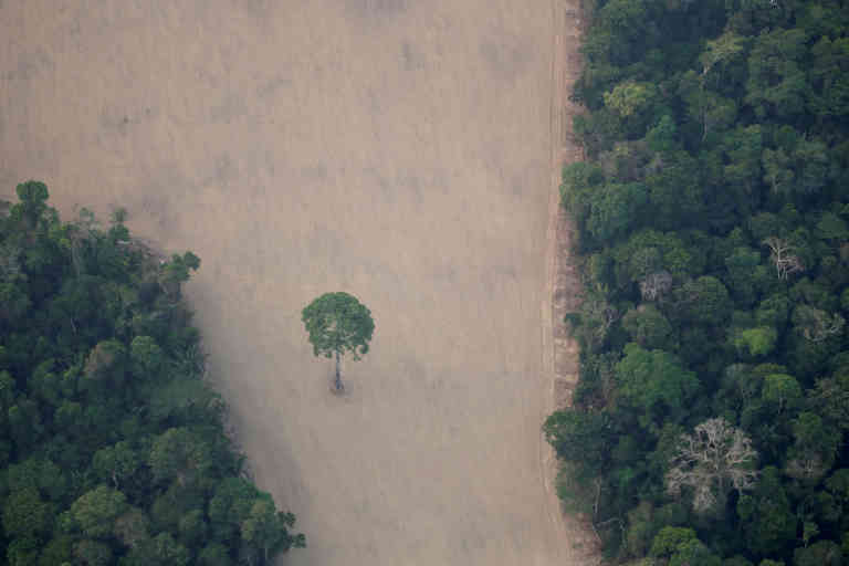An aerial view shows a deforested plot of the Amazon near Porto Velho, Rondonia State, Brazil August 21, 2019. Picture taken August 21, 2019. REUTERS/Ueslei Marcelino - RC2BSF97SZZV