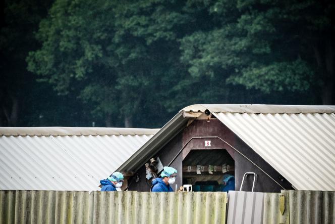 Les agents de l'Etat dans la ferme d'élevage de Deurne, le 6 juin 2020.