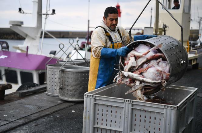 Un pêcheur décharge des poissons sur le quai du port du Guilvinec (Finistère), le 3 juin.