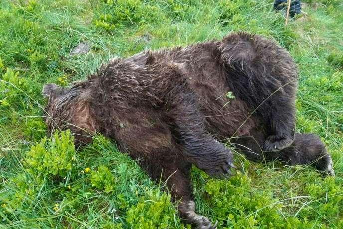 Photo diffusée par le ministère de la transition écologique et solidaire d'un ours retrouvé mort en Ariège, le 9 juin.