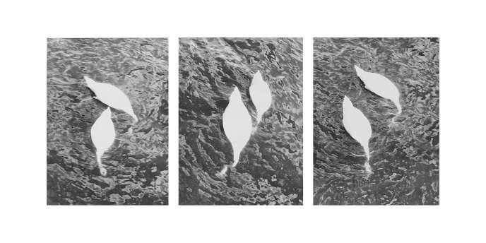 «Swans (Stockholm)» (2018), de Jochen Lempert, photograhie noir et blanc sur papier baryté mat.