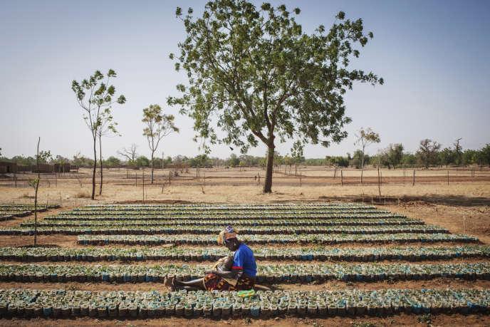 Pour faire reverdir le Sahel, l'association Terre Verte encourage la plantation des arbres au Burkina Faso depuis plus de trente ans.