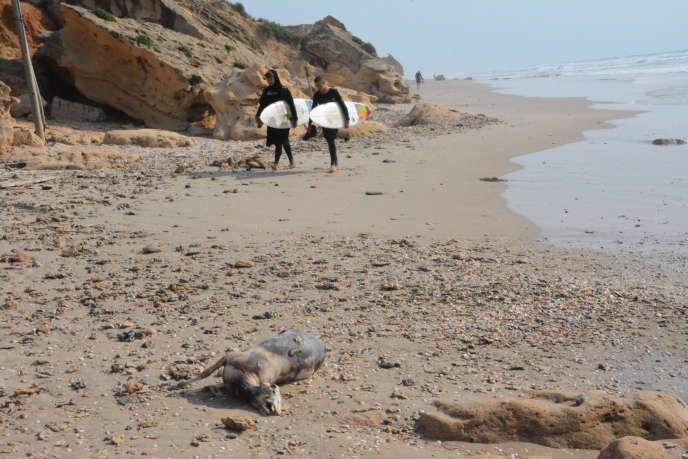 Un cadavre de mouton, échoué sur la plage de Beit Yanay, au nord d'Haïfa, en Israël, le 17 avril.