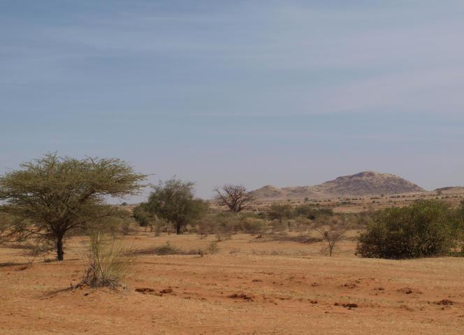 Des acacias dans le désert de la bande sahélo-saharienne,le 9 novembre 2011.