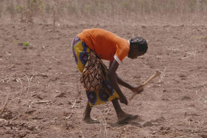 Semis d'un champ de coton au Burkina Faso.