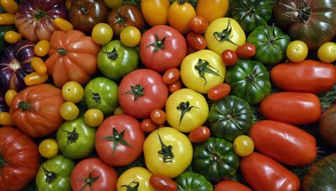 En2019, les maraîchers français ont cueilli 520000tonnes de tomates.