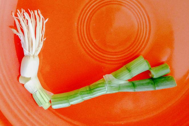 Une paire de lames peut effectuer des coupes nettes et lisses sur un organisme vivant fibreux tout comme sur de petites tiges ligneuses.