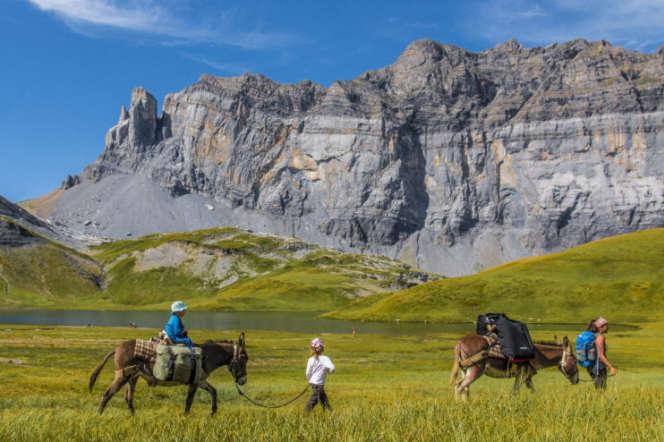 Dans la vallée du Haut-Giffre, en Haute-Savoie, les paysages se découvrent à dos d'âne, au rythme de l'animal, lent mais assuré.