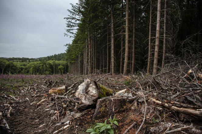 Coupe à blanc d'une forêt de feuillus dans le 3 juin dans le Morvan.
