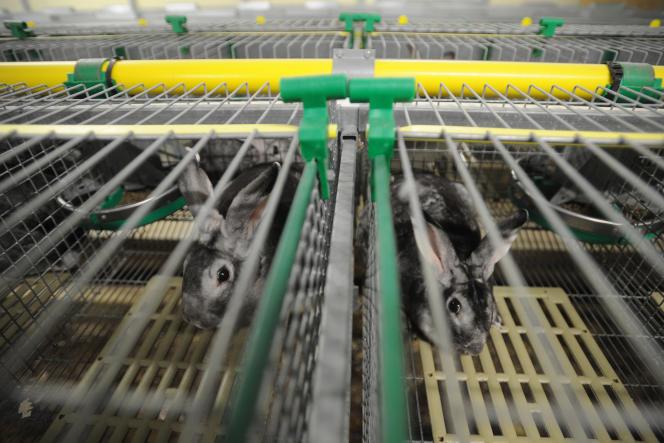 Un élevage de lapins en cage, à Vandré (Charente-Maritime), le 19 décembre 2017.