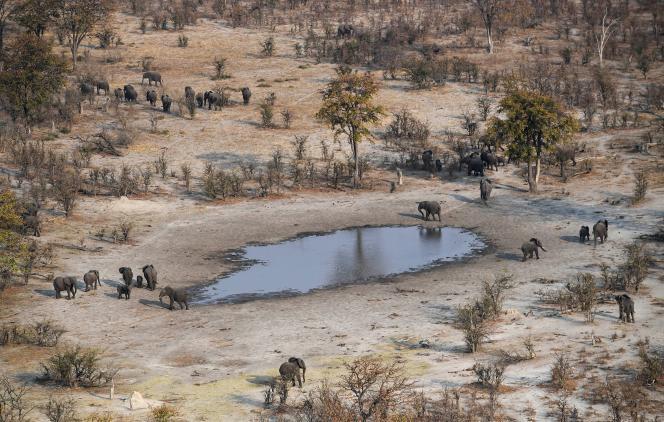Des éléphants du parc national de Chobe, au Botswana, en septembre 2018.