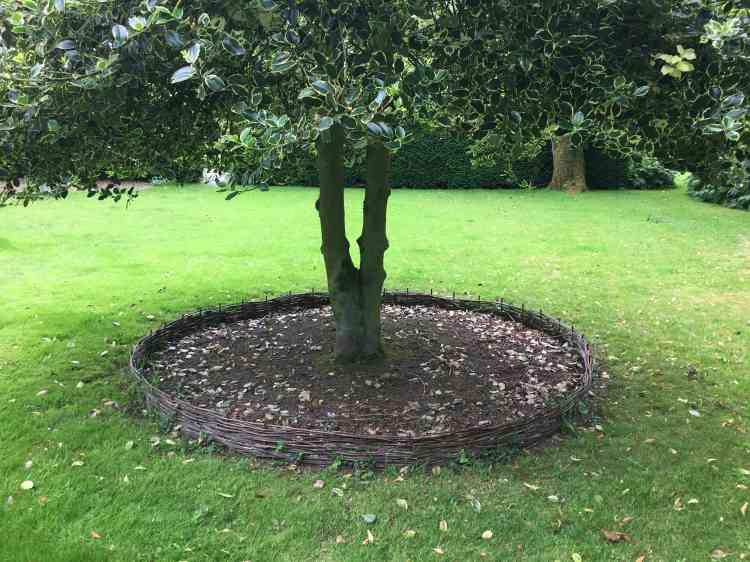 Le pied de cet arbre a été amendé et protégé par un plessis, pour que puissent y apparaître des cyclamens.