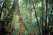 «La richesse botanique de l'Amazonie est bien connue : elle contient près d'un tiers de toute la biodiversité du monde.»