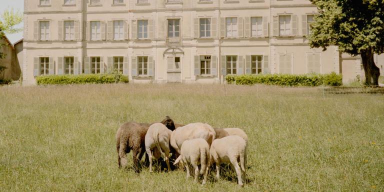 23 Juin 2020. Saint-Maurice-de-Rémens (45km au N-E de Lyon) Château du 18e siècle de Saint-Maurice-de-Rémens entourer d'un parc de 5 hectares.  Moutons dans le parc du Chateau. Ce dans ce lieu que Antoine de Saint Exupéry à passé une grand partie de ses vacances pendant son enfance. Le château appartenait  à Gabrielle de Lestrange tante de sa mère, Marie de Fonscolombe qui on héritera en 1920 et vendra en 1932 a la caisse des écoles de la ville de Lyon. En 2019 la région Auvergne-Rhône-Alpes rachète la maison, achat qui sera finalisé en 2020.