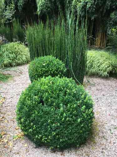 Buis taillés en boule, prêles, gravier et bambous dorés sont entretenus par la jardinière, Isabelle Breton.