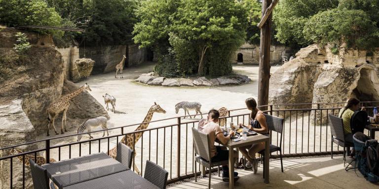 Bioparc de Doué-la-Fontaine le 23 juin 2020. Le bioparc revendique un bien être animal. Les visiteurs ne nourrissent pas les animaux et sont au plus près d'eux lorsque c'est possible.. Les espaces sont vaste et respectueux de la quiétude des animaux.