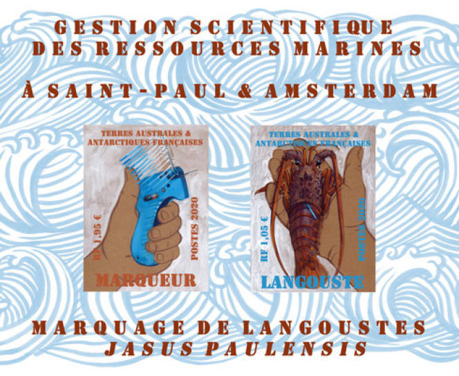 Le marquage des langoustes de Saint-Paul, archipel de Saint-Paul et Amsterdam, pour les TAAF (2020), par Marie Détrée-Hourrière.