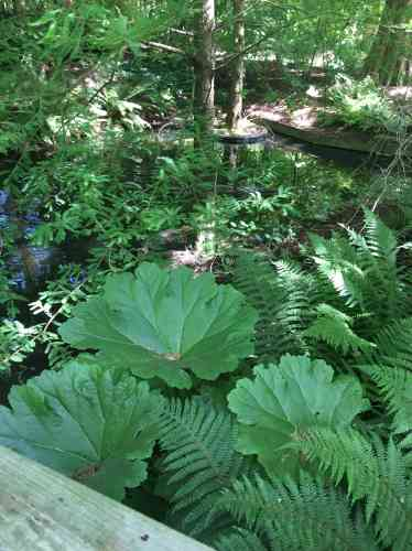Reconstitution – les alligators en moins... – d'unmilieu particulièrement favorable à la végétation.