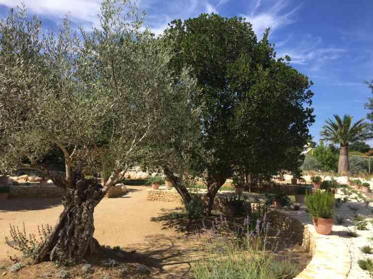 Olivier, plantes succulentes ou palmier du Chili animent le nouveau jardin de Terra Botanica.