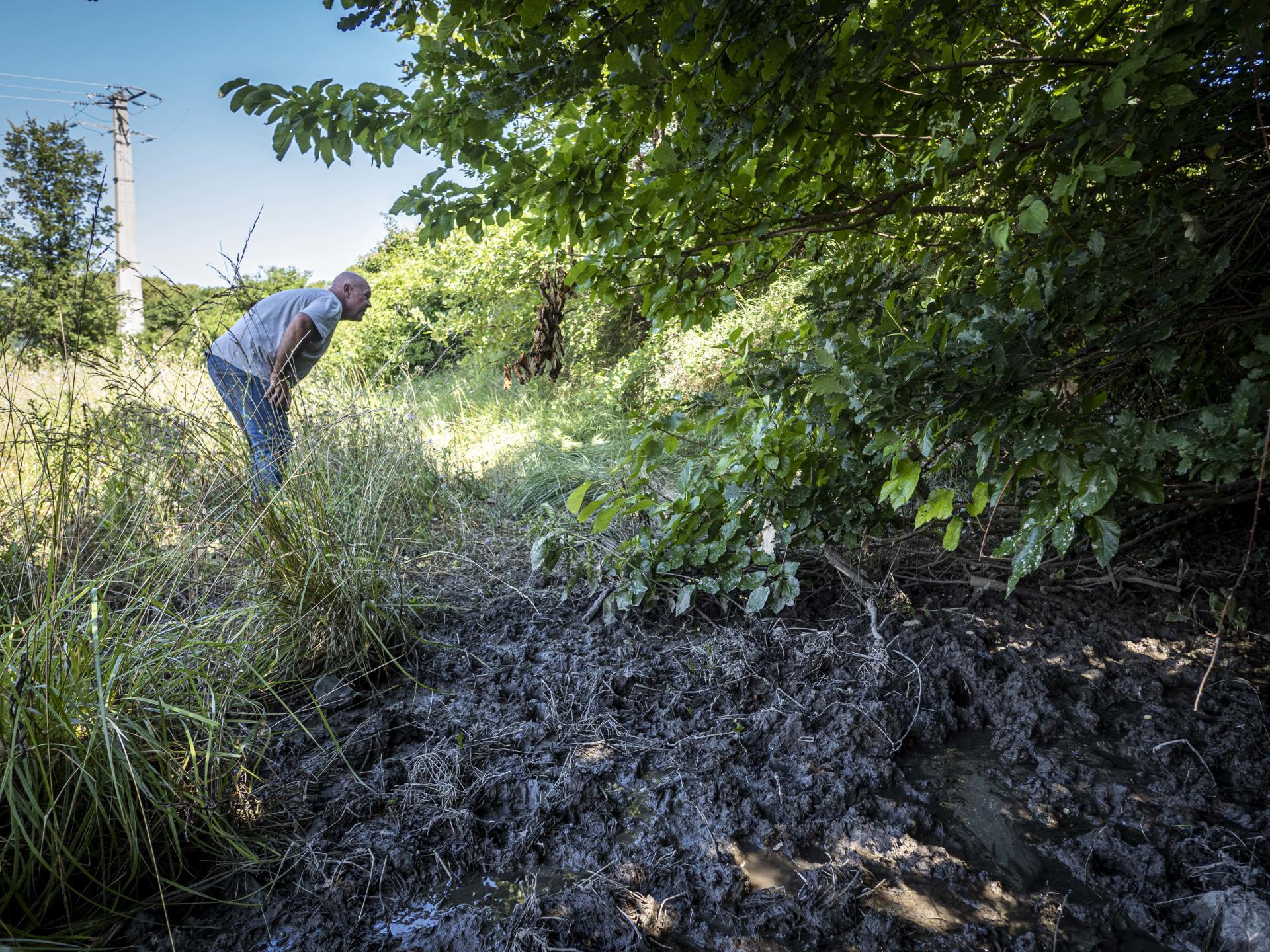 Mollans-sur-Ouvèze (Drôme), le 6 juillet. Jean-Michel Tyrand, viticulteur sur 32 hectares en côtes-du-rhône, près du trou d'eau boueux où les sangliers viennent se rafraîchir.