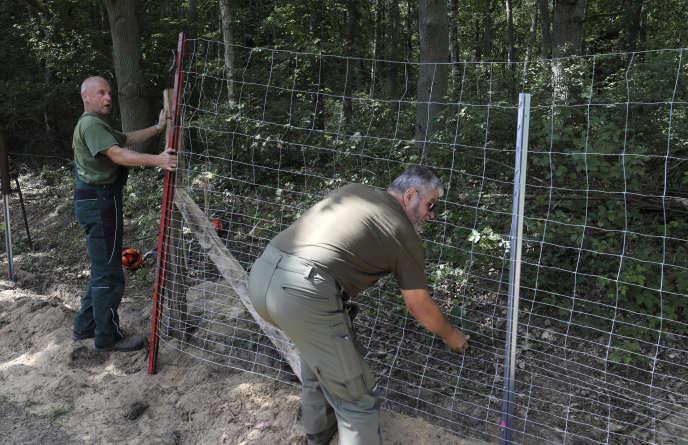Travaux de clôture de protection contre la peste porcine africaine, sur la frontière germano-polonaise, le 13 juillet àRamin (Allemagne).