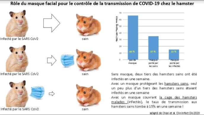 Comment l'équivalent du port du masque protège le hamster de la diffusion du coronavirus.