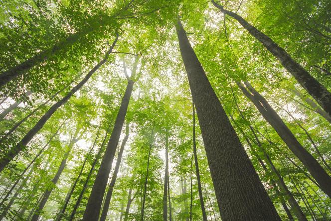 Photo : La forêt de Tronçais (Allier)
