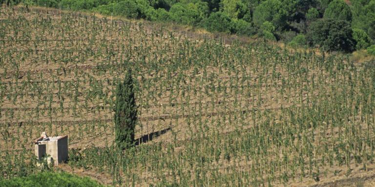 Europe/France/Languedoc-Roussillon/66/Pyrénées -Orientales/Port-Vendres:La plage de Paulilles et  le vignoble de Banyuls